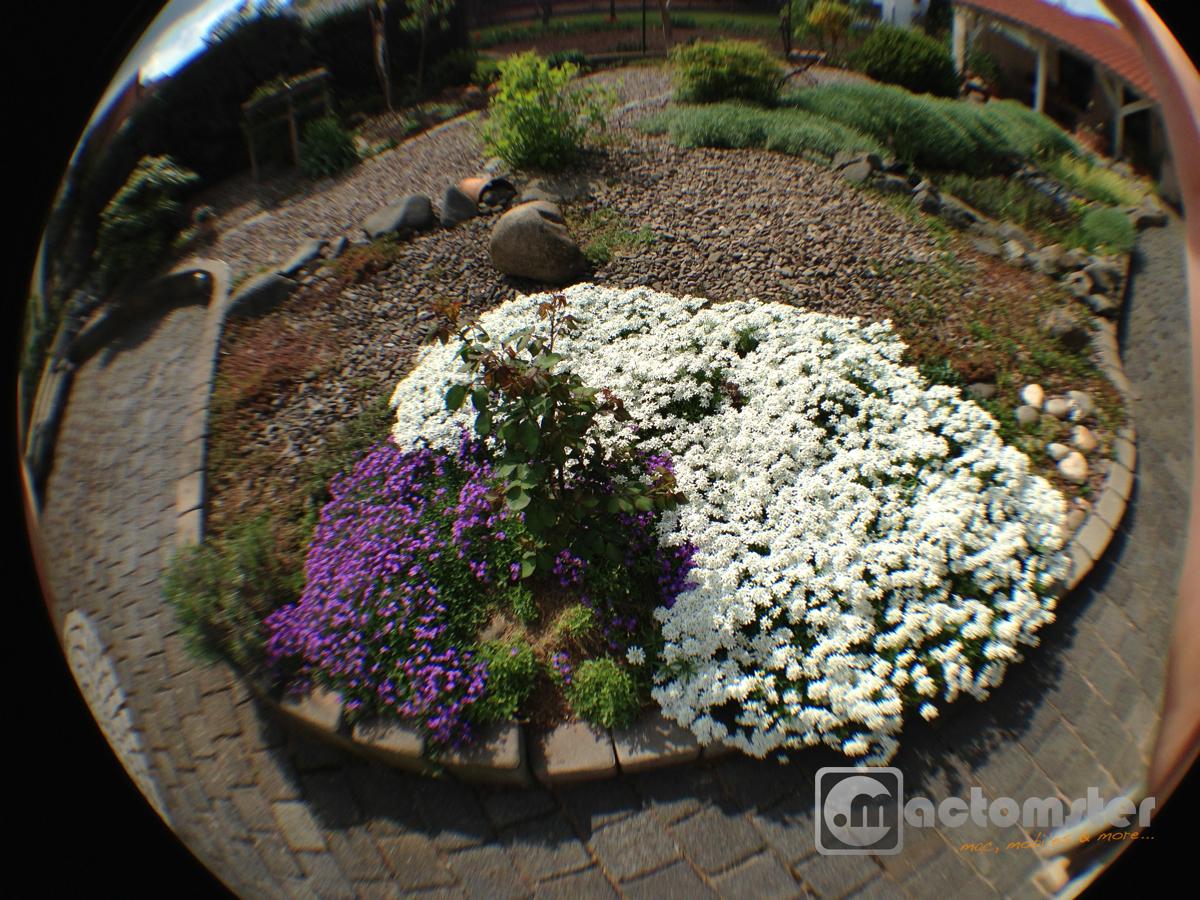 olloclip-fish-garden1